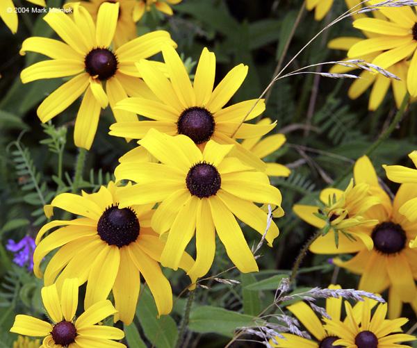 цветы ириса из бисера схема и описание.